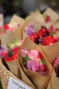 Sweet Peas at Our Little Flower Company