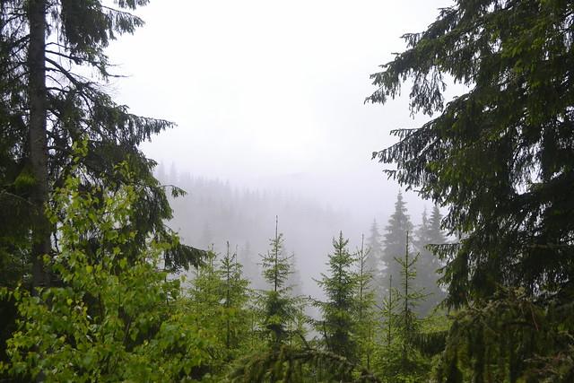 Horseback Riding Trip in the Carpathians _ Misty Forest