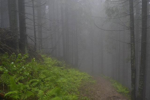 Horseback Riding Trip in the Carpathians _ Misty forest trail