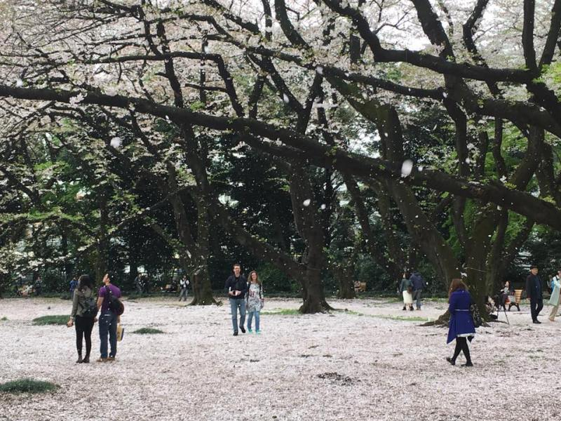 Kichi blossoms