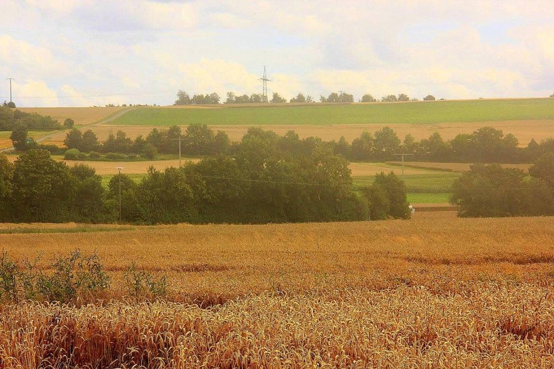 Summer corn fields ready for harvest in Germany