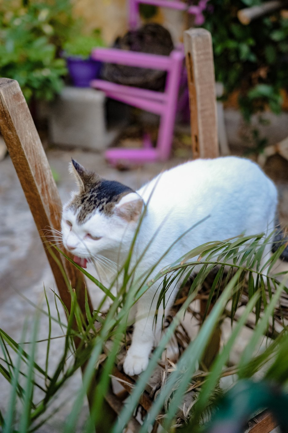 Athens travel diary with cats-6