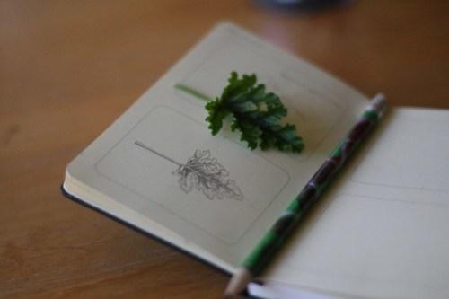 Resolution : Draw More