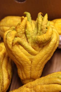 buddah's hand citron