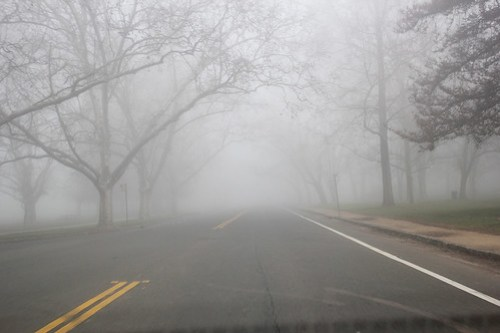 Morning Drive in the Fog