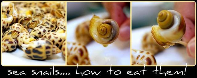 snails collage