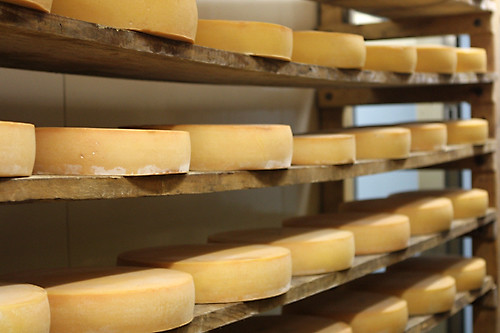 cheeses ripening