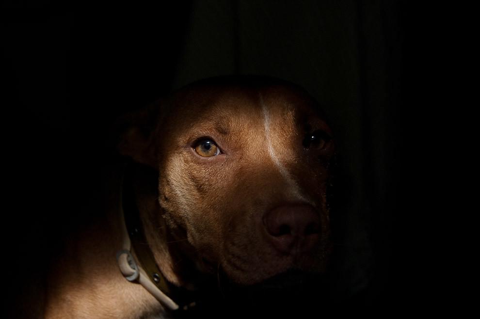 Un perro llamado Leica mirando tímidamente a la cámara mientras es fotografiada. (Elton Núñez - Lambaré, Paraguay)