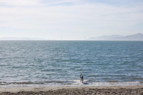 Dog beach with Golden Gate Bridge (in background).