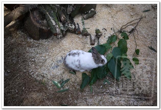 台北市立动物园:看熊猫团团和圆圆
