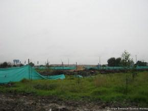 Reforestación, Humedal EL Burro