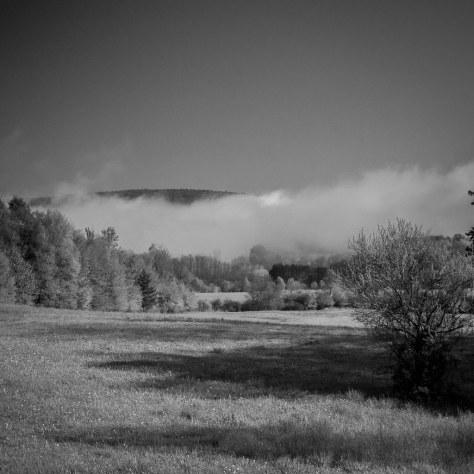 Mornings Fog in the Valley