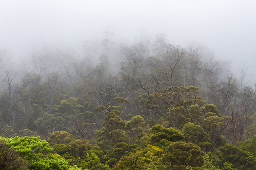 Foggy morning in Tassie's East coast