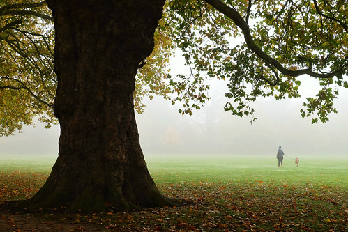 Dog walker in the fog