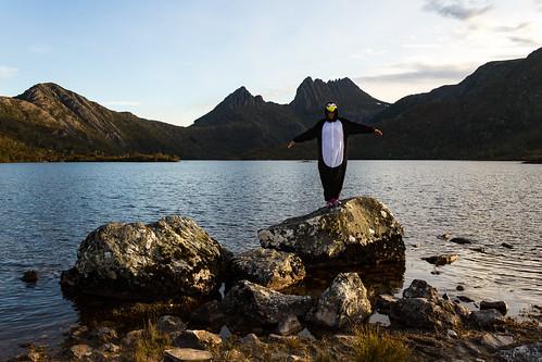 Penguin in the wild