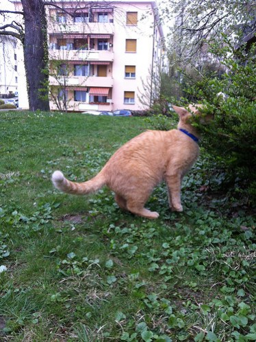 New Cats 194.jpg