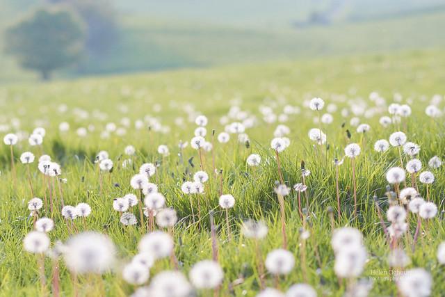 It was like a field of little lollipops :)