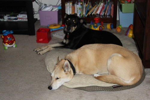 The dogs share the bed