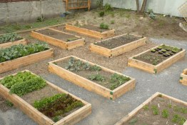 Community Gardens Hawkes and E Hastings