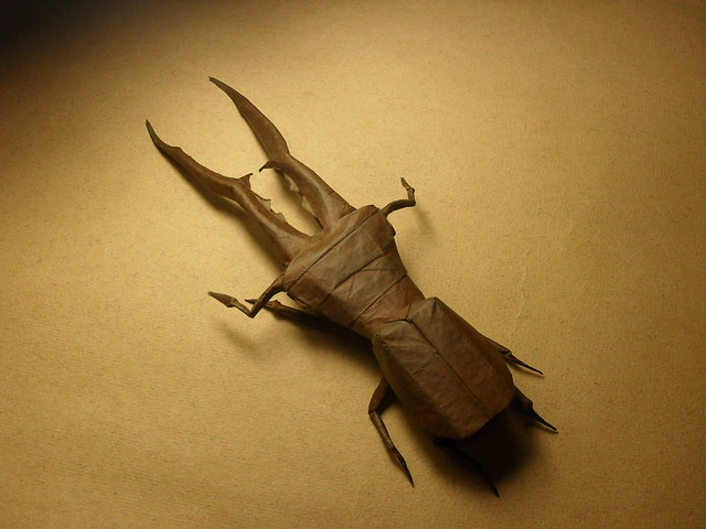 Cyclommatus Metalifer 2.0
