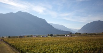 Orofino | Vineyard
