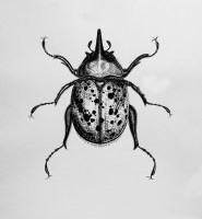 Beetle Ink Illustration