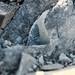 Fossil hunting in the Okanagan