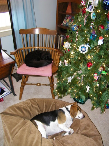 198/365/928 (December 26, 2010) - Peaceable Kingdom at Christmas