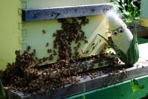 Frank N Hive 2