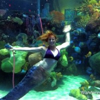 Kid-Friendly Vegas: Are Mermaids Real?