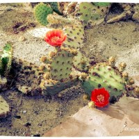 Photo Essay: Cactus Garden