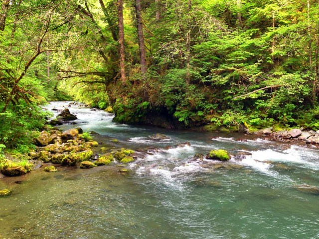 Big Quilcene River, Washington, 2013