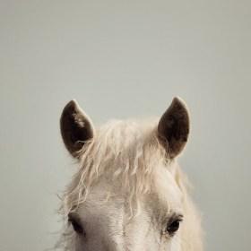 peek a boo white horse print eye poetry