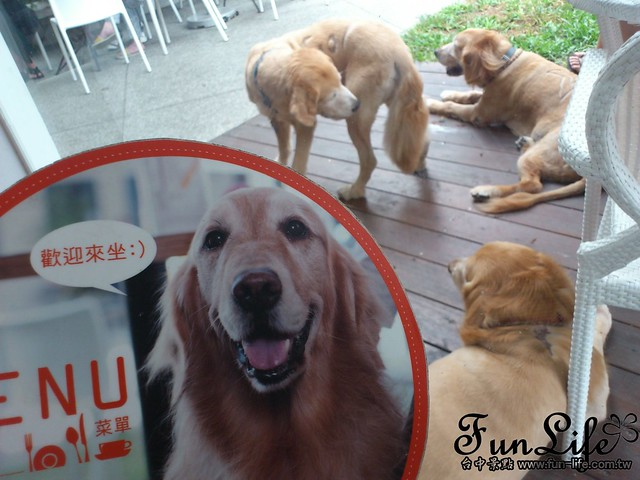 台中寵物咖啡館-Sunshine Cafe&Bobby Pet Shower