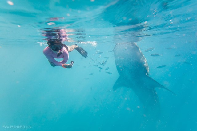 TWO2TRAVEL - CEBU - OSLOB'S WHALESHARKS