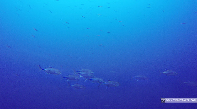 School of jacks at Pescador Island - two2travel.com