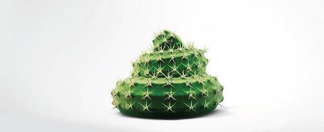 Intro Cactus Maxi