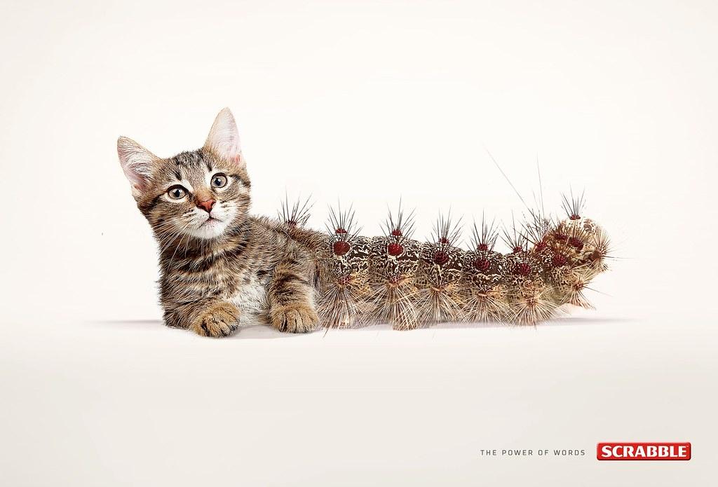 Scrabble - Cat Erpillar