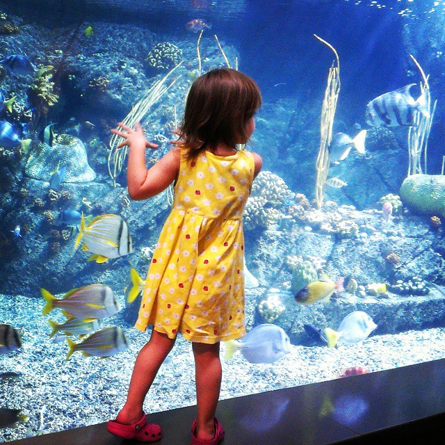 #Homeschool day at #AquariumofthePacific - Yay! #homeschooling #magicalchildhood