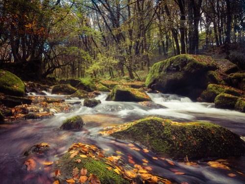 Autumnal Golitha