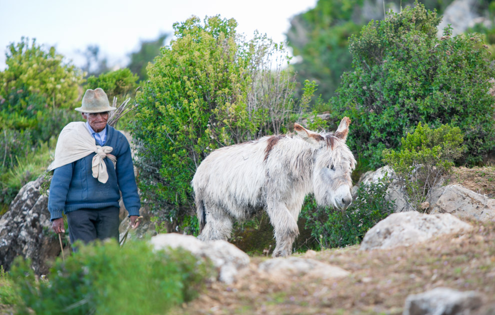 Un residente de la Isla del Sol transporta a uno de sus burros de vuelta a su hogar, a más de 4000 metros de altura sobre el nivel del mar. La mayor parte de la isla está poblada por indígenas de origen quechua y aymara, dedicados a la agricultura, el turismo, artesanía y el pastoreo.  (Tetsu Espósito)