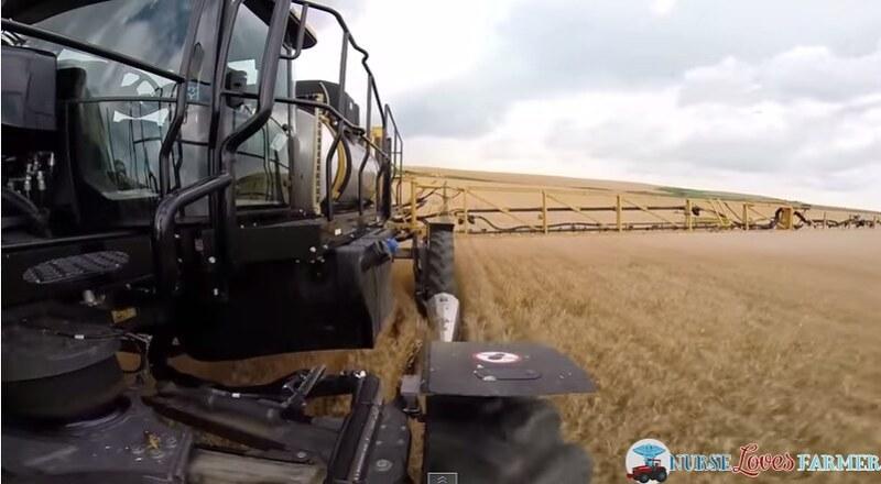 Pre-Harvest Glyphosate