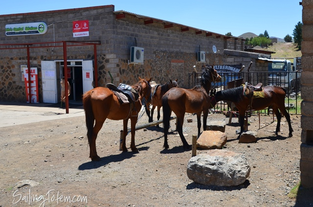 horses at the OK corral