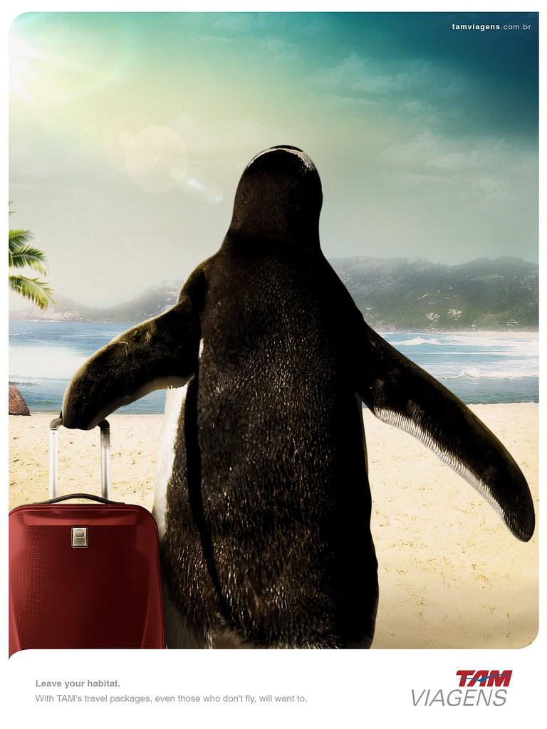 TAM Viagens Travel Packages - Leave your habitat Penguine