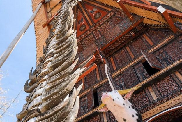 Horns and tongkonan house. Tana Toraja
