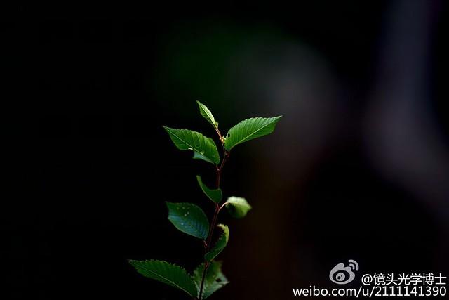 Zhong Yi / ZY Optics / Mitakon Speedmaster 135 mm f/1,4 (Shenyang Optical Electronics)