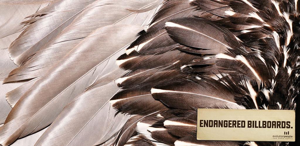 Evolution People New Media Agency - Endangered Billboards 1