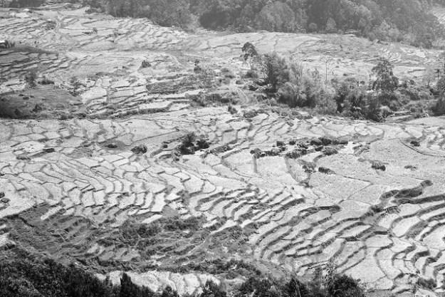 Dry rice terraces. Batutumonga, Tana Toraja.