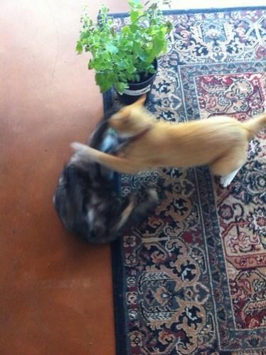 Feline Friday: Drug wars part 2