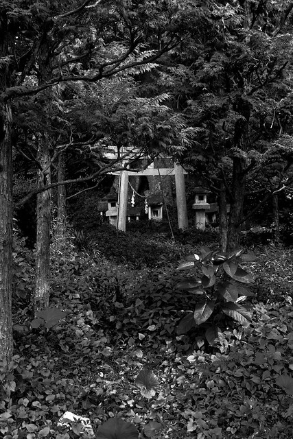 #5 The Giant Zelkova of Kamitokujira